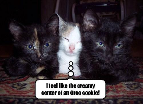 snuggle cute cookies - 8140103424