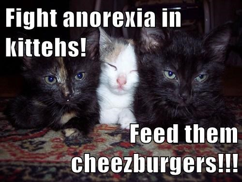 Cheezburger Image 8140109056