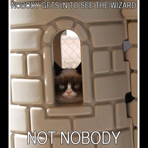 wizard of oz,Grumpy Cat,imagination,Cats