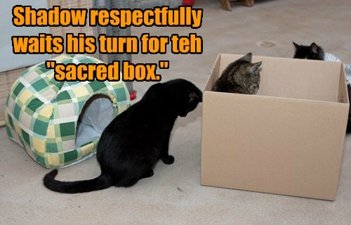 "Shadow respectfully waits his turn for teh ""sacred box."""