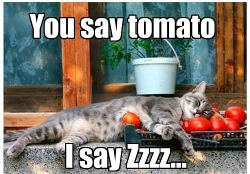 tomatoes,puns,naps,Cats
