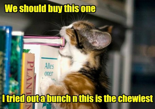 cute books chewing Cats funny