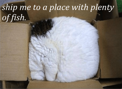 Cats,boxes,fish,shipping,I sits I fits