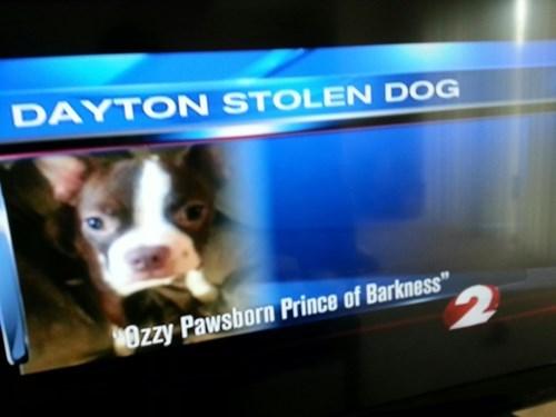 dogs news stolen puns Ozzy Osbourne - 8142140928