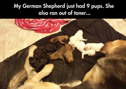 dogs,puppies,mama,cute,printer