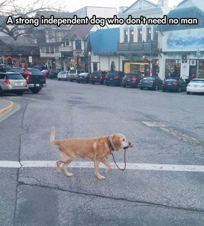 dogs,leash,funny,walk