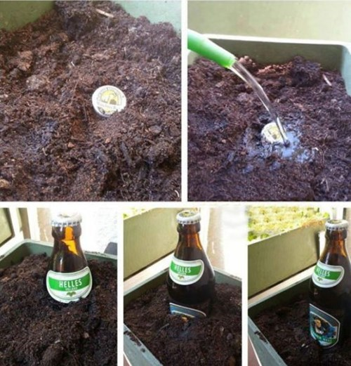 beer after 12 garden g rated - 8142460160