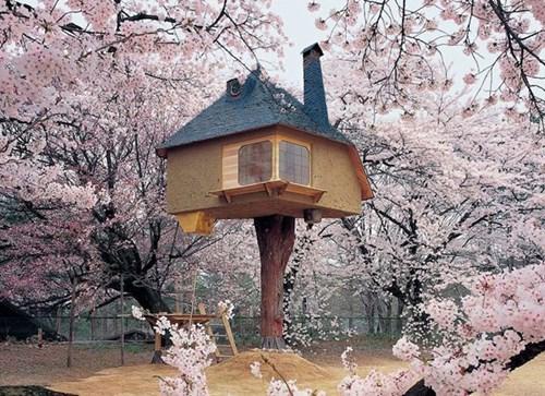 tree house design - 8142557440
