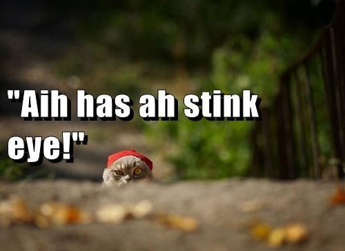 stink eye cute grumpy Cats funny - 8142867968