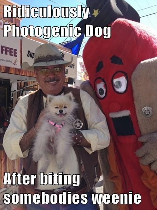Cheezburger Image 8142903808