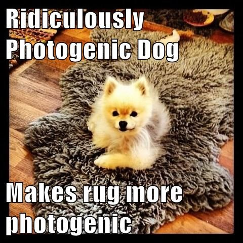 Ridiculously Photogenic Dog Makes rug more photogenic