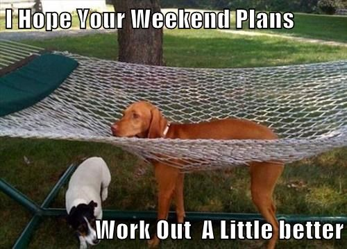 dogs hammock funny weekend - 8143172608