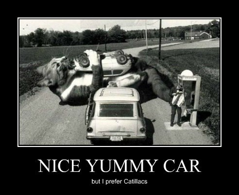 cars Cats giant funny puns - 8143204352