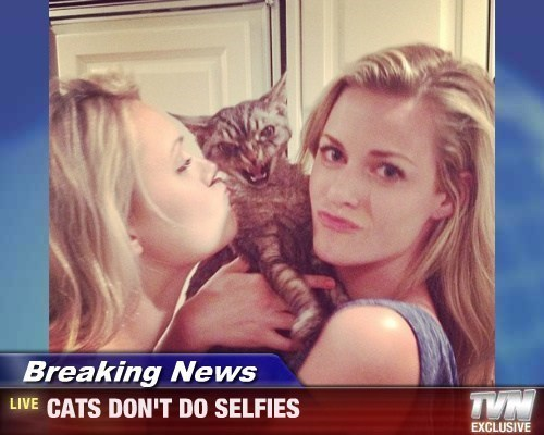 Felines are Totally Over the Duckface!