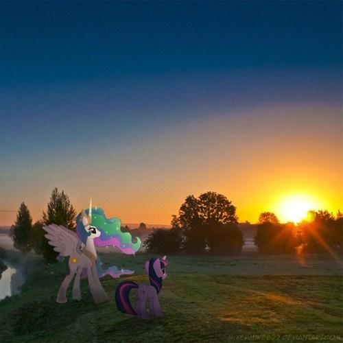 twilight sparkle sunrise princess celestia - 8143536640