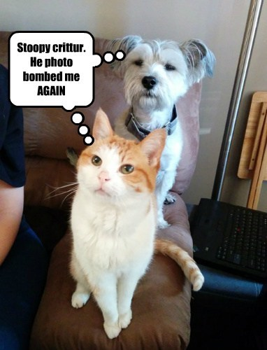 photobomb dogs Cats funny - 8143588096
