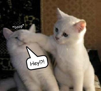 Cats boop funny kitten - 8143603456