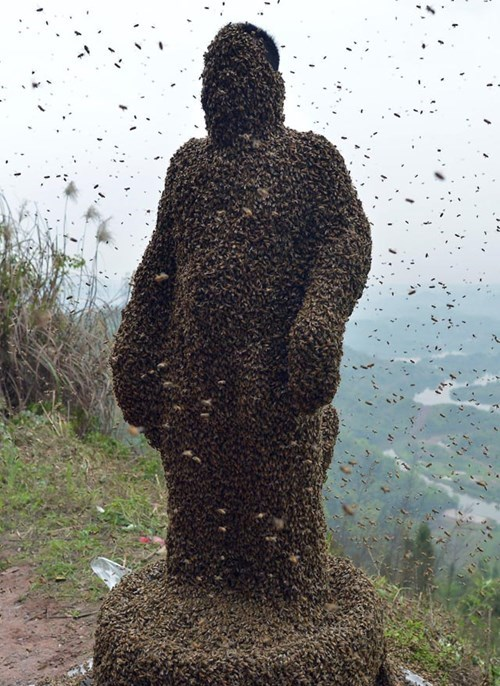 bees,stunt,BAMF,g rated,win