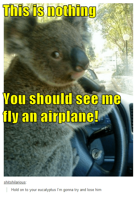 crazy,koalas,driving,airplanes,funny