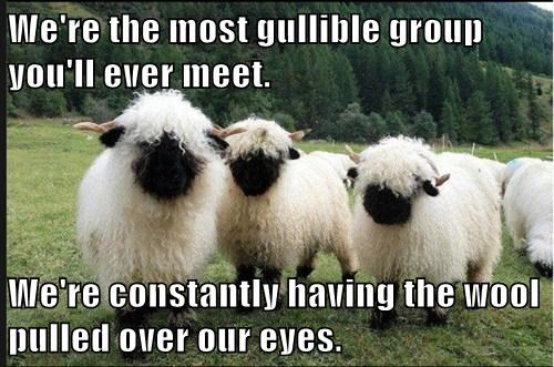 expressions puns sheep funny - 8143887360