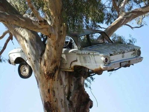 cars puns tree g rated win - 8143973120