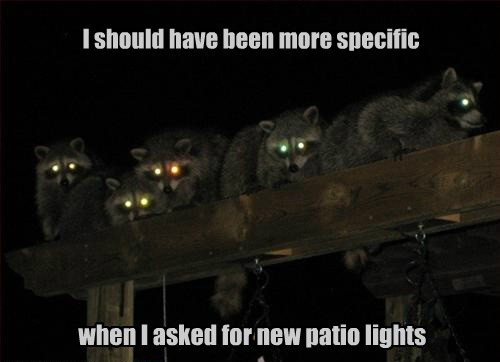 lighting,you had one job,raccoons,funny