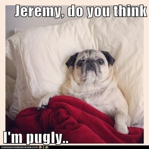 dogs puns cute pugs - 8145008640