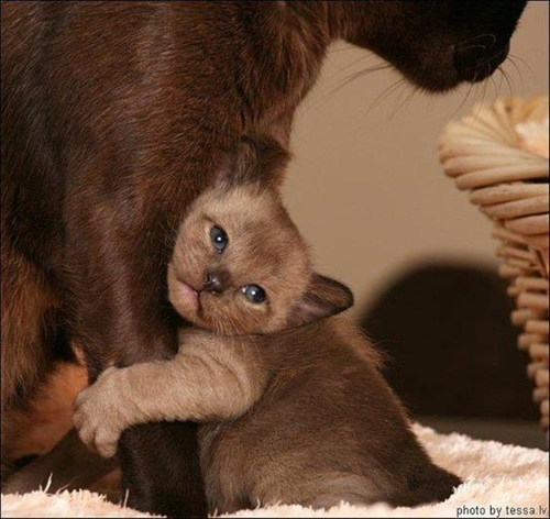 cute mom Cats hug