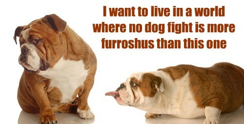 dogs peace fights cute - 8145294336