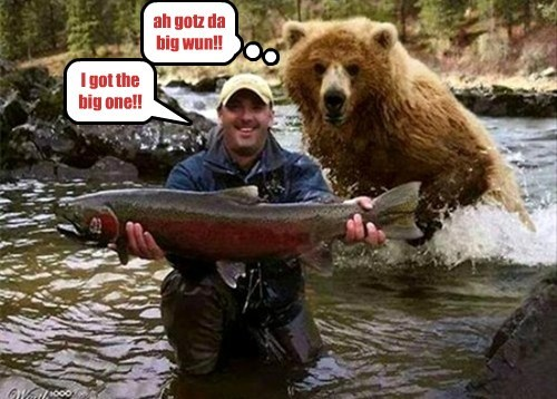 bears,salmon,food chain,funny