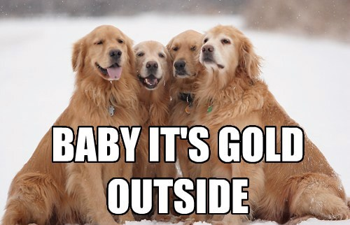 dogs weather puns golden retriever - 8147205376