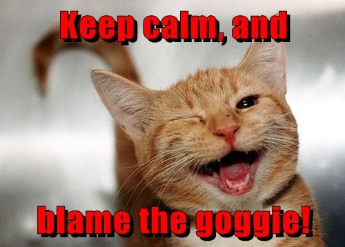Keep calm, and blame the goggie!