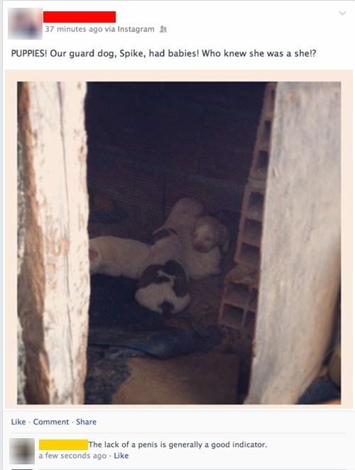 dogs pets puppies cute failbook - 8147287296