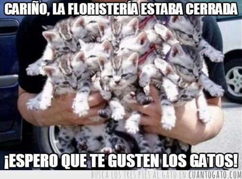 gatos Memes animales - 8147317504