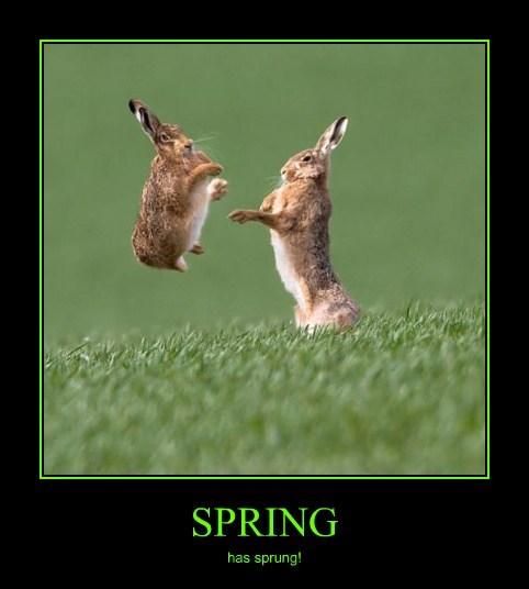 easter bunnies spring cute - 8148246784