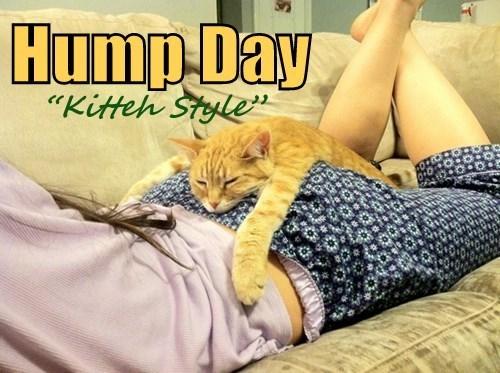Cats cute snuggle hump day - 8148698624
