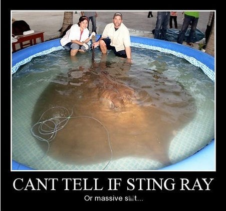 stingray,dog poop,funny,animals