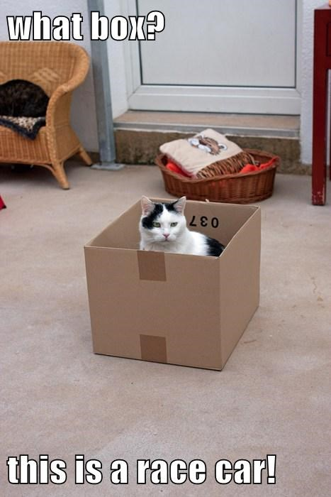 boxes,cute,imagination,Cats