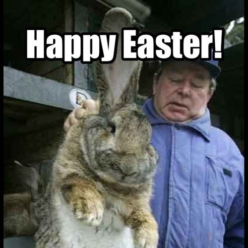 easter Easter Bunny funny rabbits - 8148838144