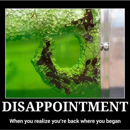 disappointed bugs idiots funny - 8148929792