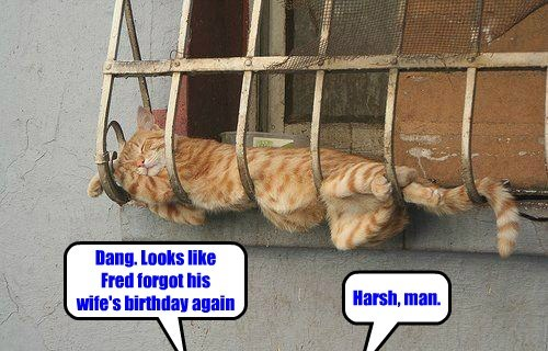 in trouble Cats funny - 8149028352