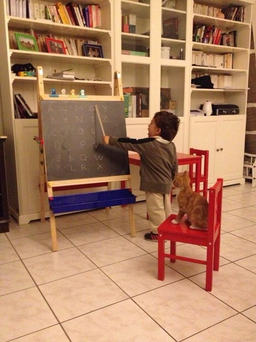 school,kids,cute,parenting,chalkboard,Cats,g rated