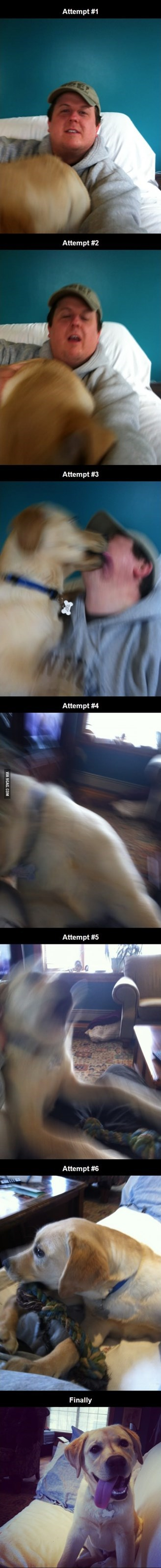 dogs selfie FAIL funny - 8149287680
