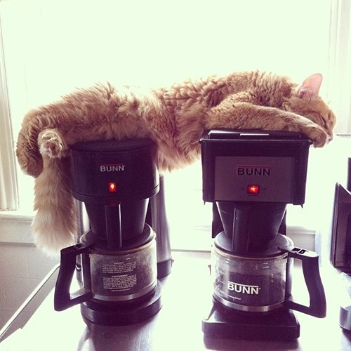 monday thru friday coffee maker work coffee Cats g rated - 8149309952