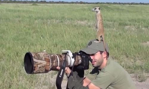meerkat,photos,cute