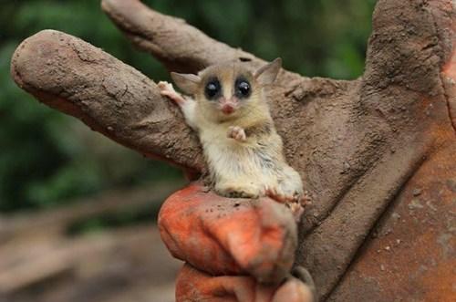 cute photograph tree posing - 8149622016