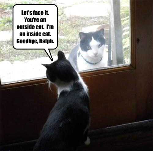outdoor cat puns Cats funny - 8150214912