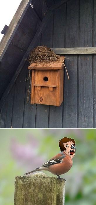 bromas Memes animales - 8150505216