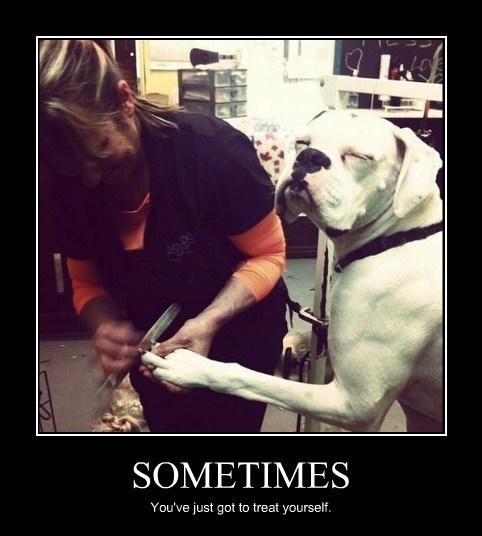 nails fancy dogs funny - 8150660352