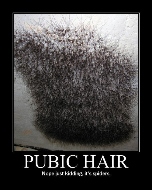 spiders wtf pubes funny - 8150676992
